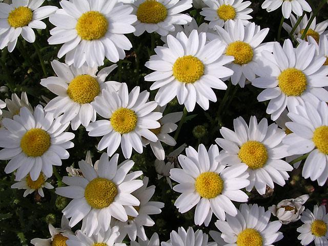 flower016_m.jpg