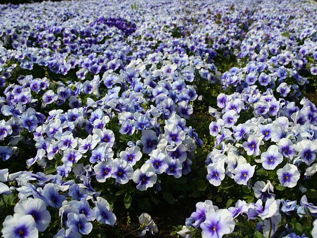 flower_640_480_22.jpg