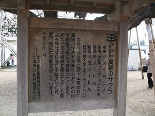 2008_0405takotako0007.jpg