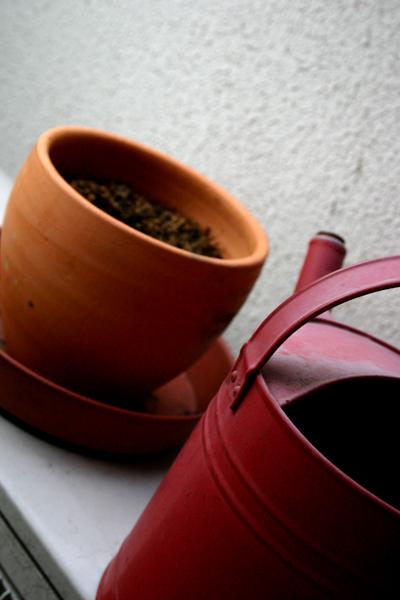 コーヒーの木5週目_1