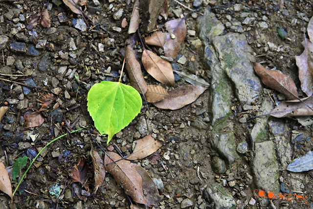 グリーンな落ち葉