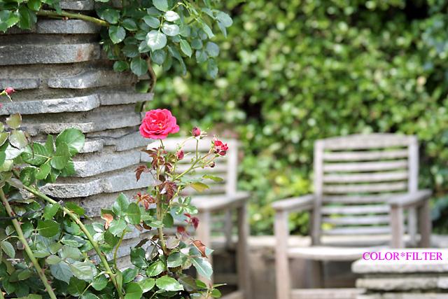 一輪の赤いバラ