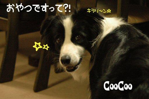 DSC_8673.jpg