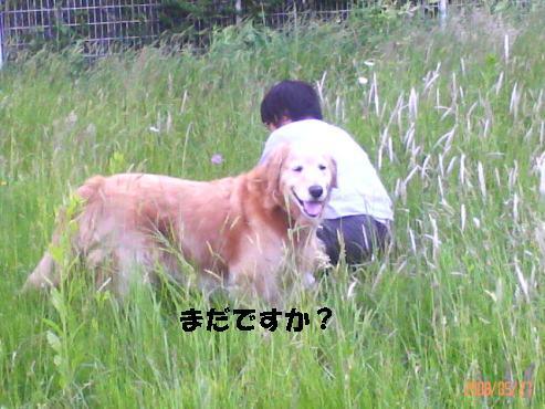 200805271536001.jpg