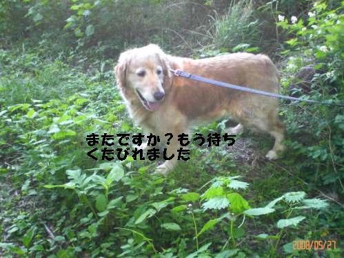 200805271559000.jpg