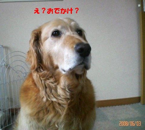 200806031304000.jpg