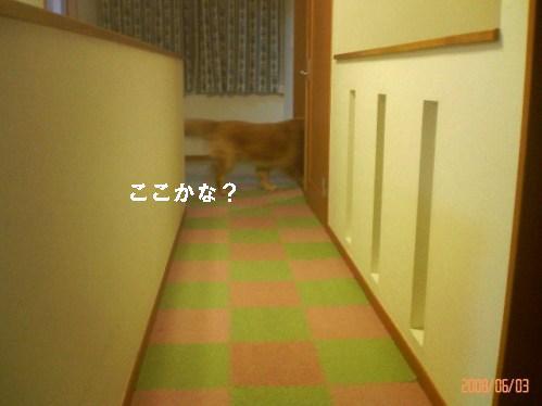 200806032109001.jpg