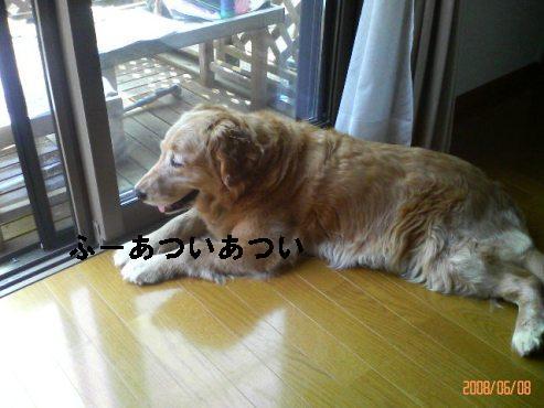 200806081342001.jpg