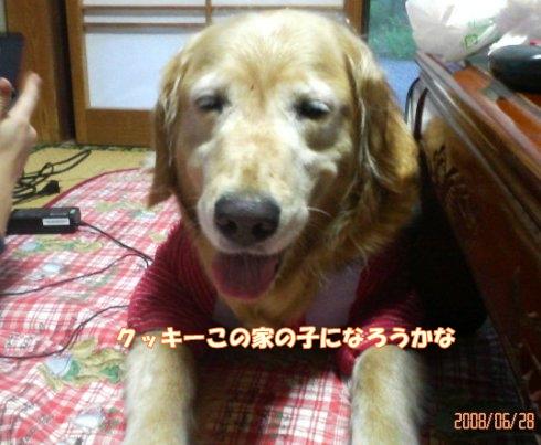 200806281859001.jpg