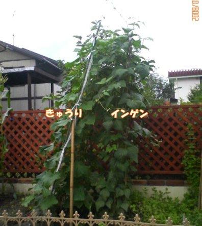 200807291601000.jpg