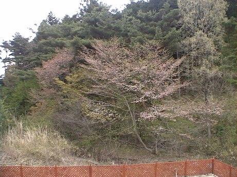 DVC00490.jpg