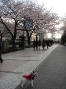 2008/03/27①