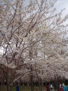 2008/04/26②