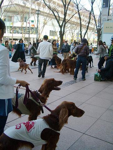 東京パレード3月16日 053