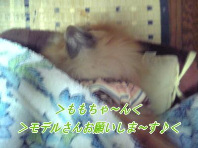 wanpi01_convert_.jpg