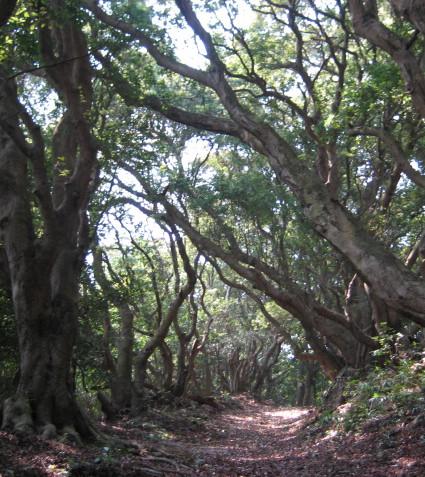 木陰を散策