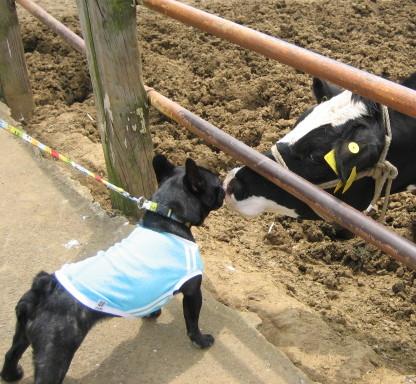 牛さんと交流2