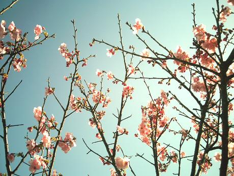 お花(DSC517)