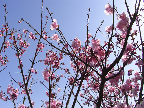 お花(R8)