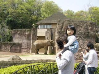 動物園と言ったら「まず象は見ておこう」