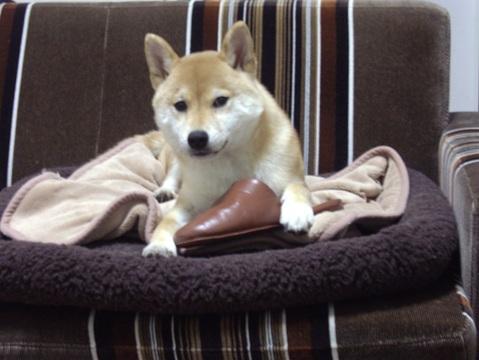 柴犬ズン032005
