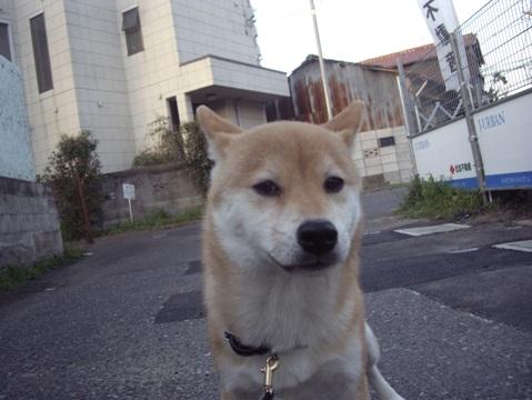 柴犬ズン画像032304