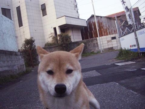 柴犬ズン画像032302