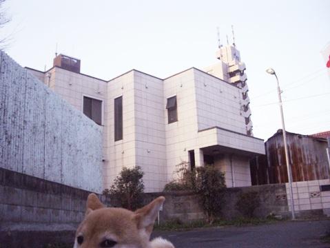 柴犬ズン画像032305