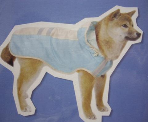 柴犬ズン画像032406