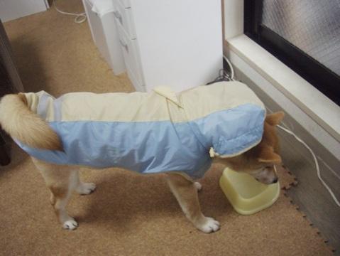 柴犬ズン画像032401