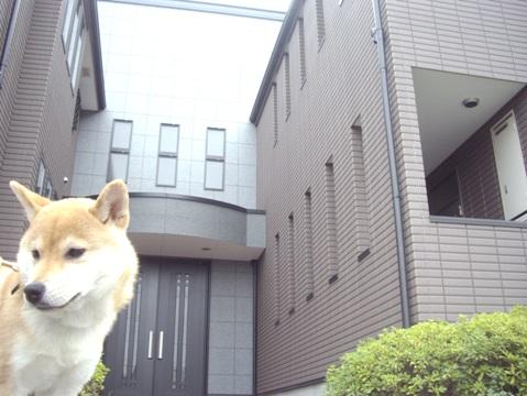 柴犬ズン画像032612