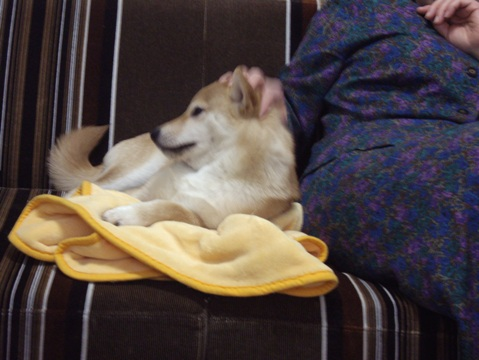 柴犬ズン画像032706