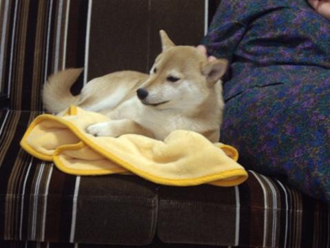 柴犬ズン画像032707