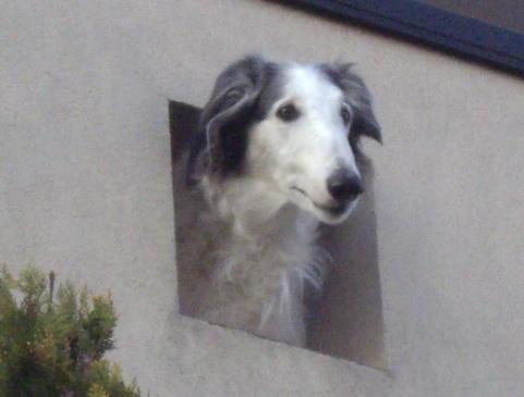 柴犬ズン画像032913