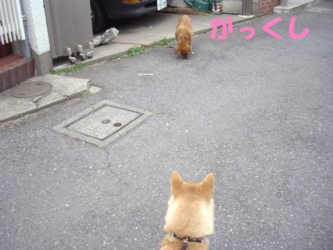 柴犬ズン画像033001