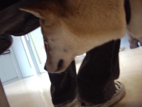 柴犬ズン画像040209