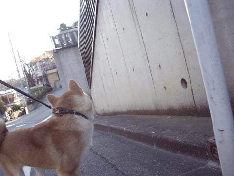 柴犬ズン画像040502