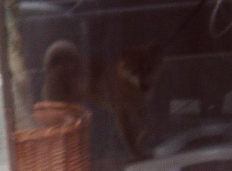 柴犬ズン画像040617