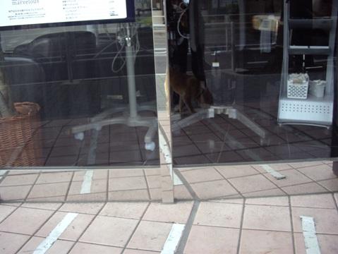 柴犬ズン画像040618