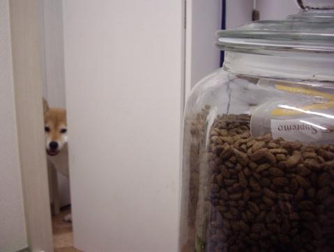 柴犬ズン画像040904