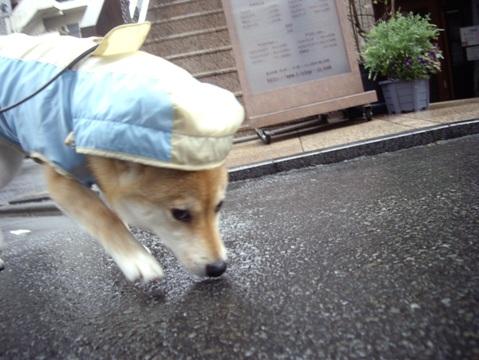 柴犬ズン画像041002