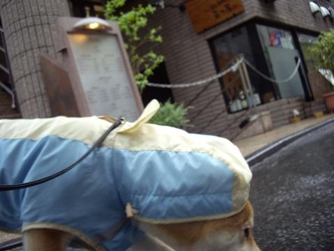 柴犬ズン画像041001