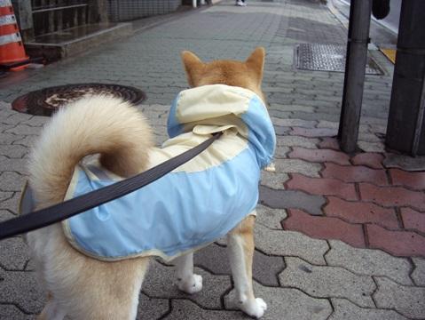 柴犬ズン画像041005
