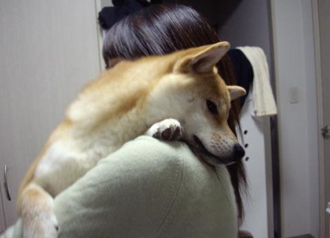 柴犬ズン画像041030