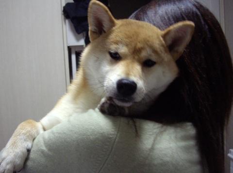 柴犬ズン画像041031