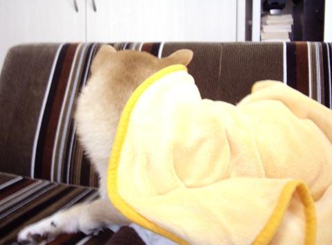 柴犬ズン画像041803