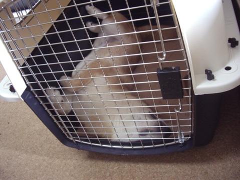 柴犬ズン画像042805