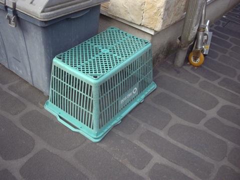 柴犬ズン画像043009