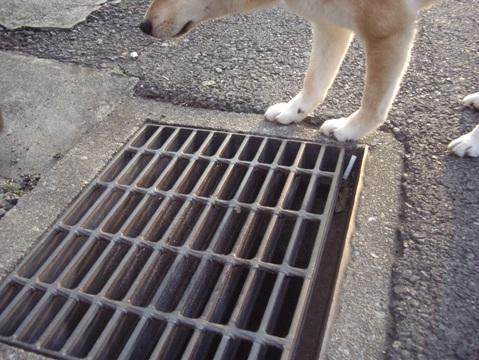 柴犬ズン画像0050114