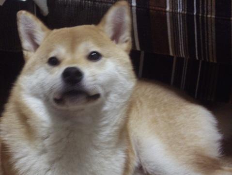 柴犬ズン画像050302